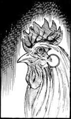 Chicken Lucy